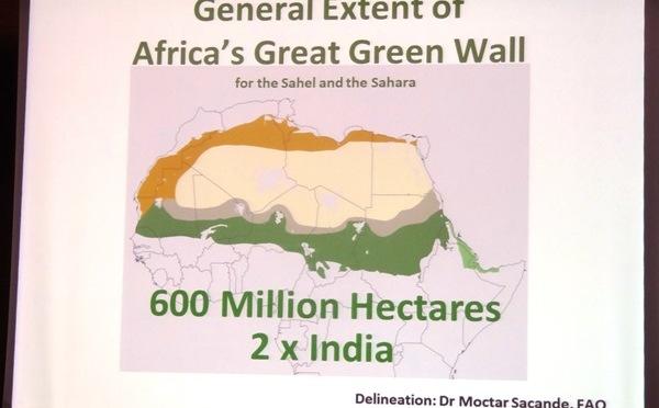 Synergie et mutualisation des efforts pour les acteurs de la Grande Muraille Verte